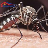 Biện pháp phòng chống dịch sốt xuất huyết trong đại dịch COVID-19