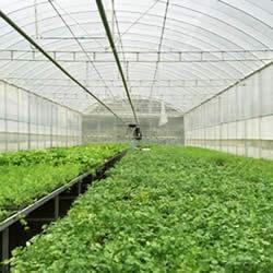 Nên mua loại lưới chống côn trùng nào dùng trong ngành trồng trọt?