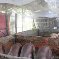 Tại sao nên sử dụng lưới chống côn trùng trong chăn nuôi