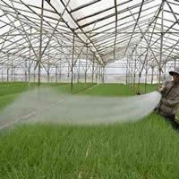 Lợi ích của lưới chống côn trùng trong nông nghiệp
