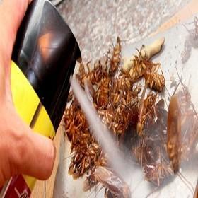 Hạn chế hiểm họa từ việc vô tư xịt thuốc diệt côn trùng tràn lan